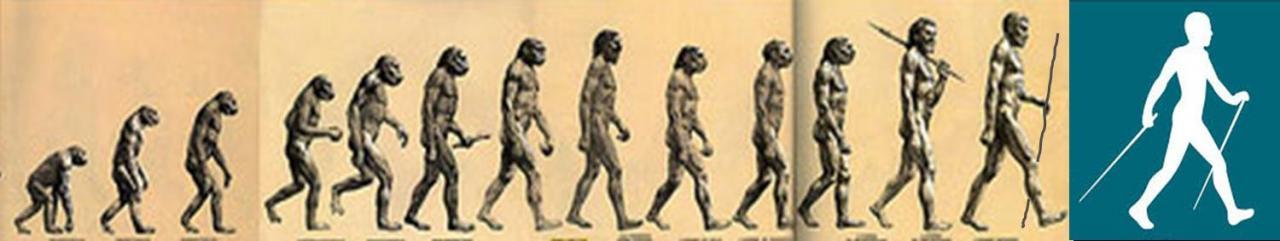 evolution-mn